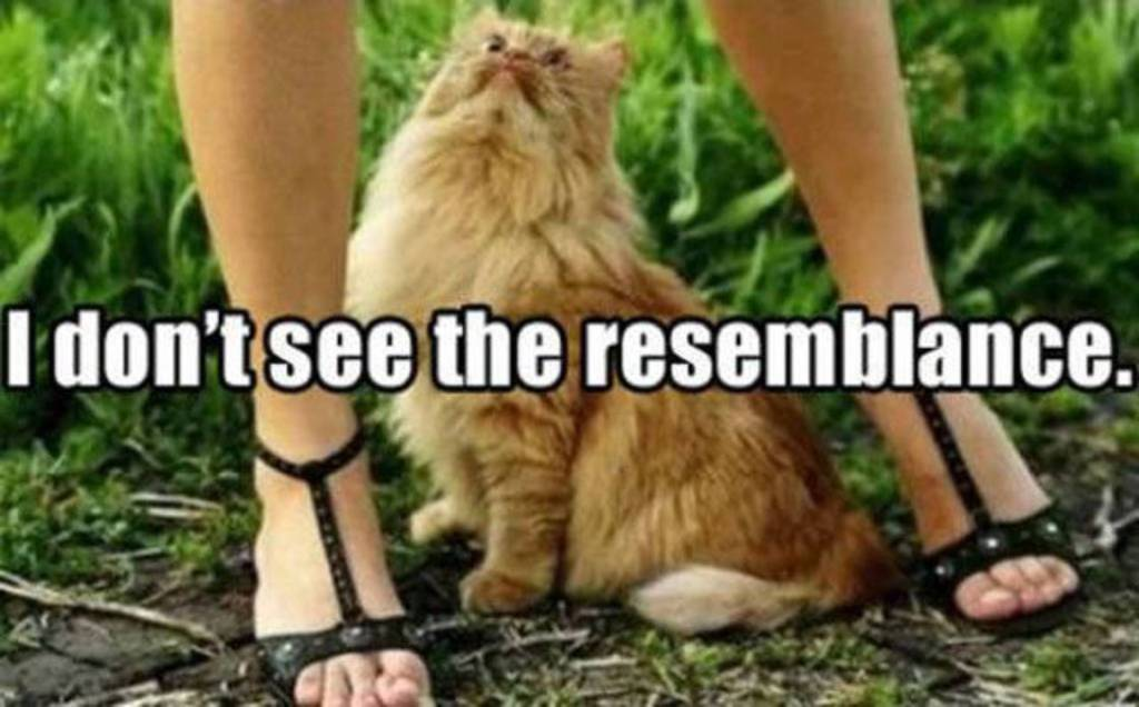 A picture of a cat sat between the legs of a woman looking up along with the quote, I don't see the resemblance